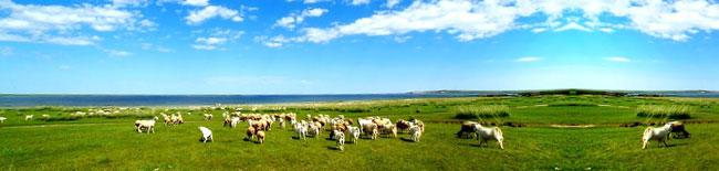 牛羊养殖基地介绍_山东肉牛羊养殖基地_大型牛羊养殖基地图片